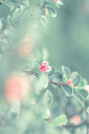 eine Blume in der Morgensonne