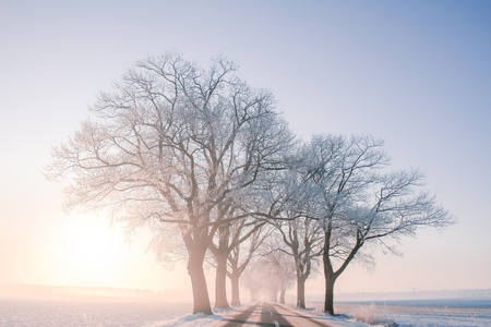 Some trees in the winter sun