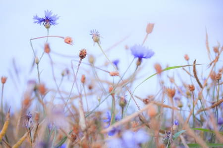 flower power Stock Photo - 24242376