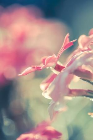 flower power Stock Photo - 24242382