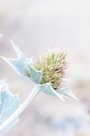 eine Blume am Morgen Sommersonne Lizenzfreie Bilder