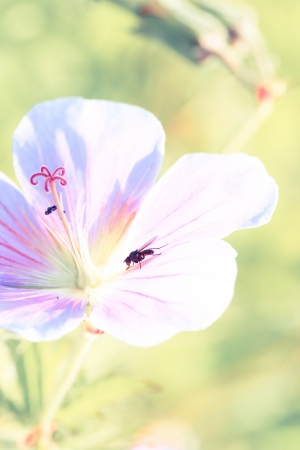 a flower in the morning summer sun Stock Photo - 24242675