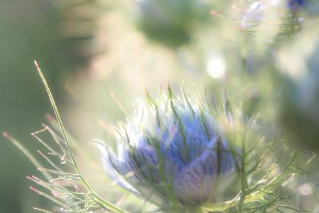 una flor en el sol de verano por la ma�ana
