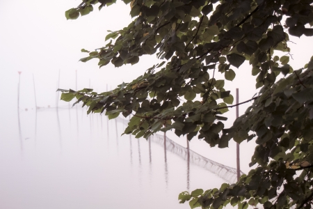 a lake bank on a foggy october morning Stock Photo