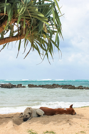 hot summer: The beach of Bali on a hot summer day