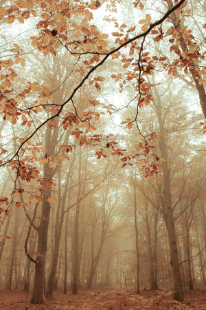 luxuriously: A landscape on a foggy October morning Stock Photo