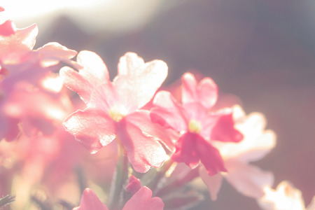 luxuriously: a flower in the morning summer sun