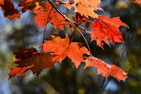 Autumn is a very beautiful and the most colorful season of the year. Everything turns to orange, yellow or red