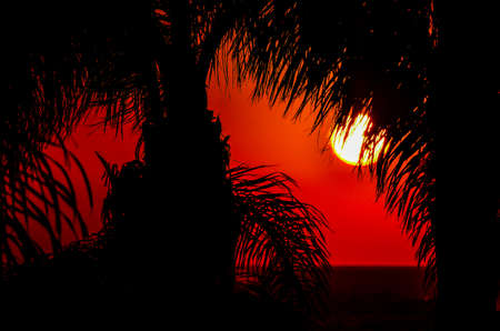 Tranquil scenic of palmtrees during the sunset time on a touristic greek island