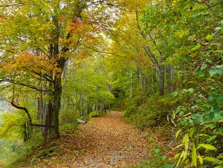 A leaf covered path winds through the woods surrounded by colorful autumn foliage in a peaceful, rural area of North Carolina.