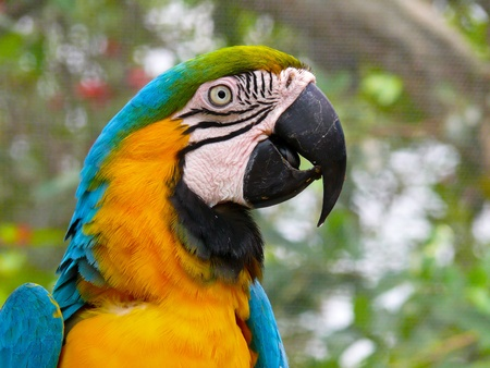 inhabits: This colorful parrot (aka Blue and Gold Macaw) inhabits tropical South America.