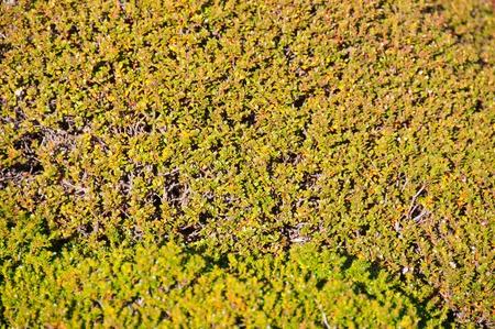 couverture du sol sur les rochers