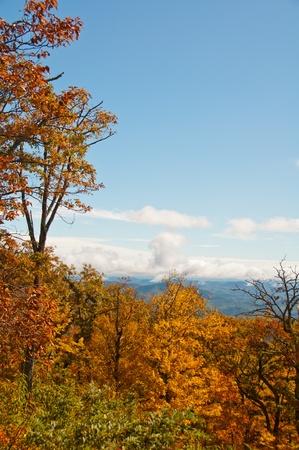 Cadres feuillage color� le paysage d'automne sur le Blue Ridge Parkway, Caroline du Nord.