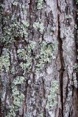 Closeup of tree bark with moss. Stock Photo
