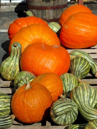 Pumpkins and Squash   Assortment of holiday vegetables at a farmers market  photo