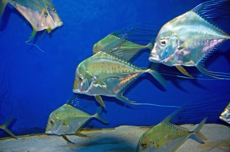 This silver type of Jackfish greets visitors at the popular family attraction
