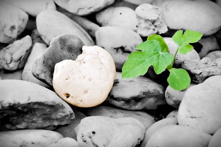 Heart-shaped stone and little plant photo