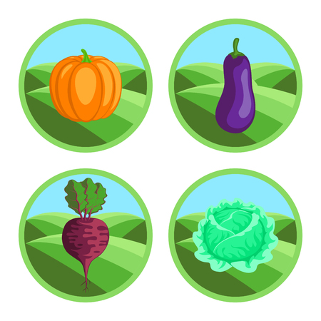 foodstuffs: Beet, eggplant, pumpkin, cabbage. Organic vegetables, round vector color badges or tags Illustration