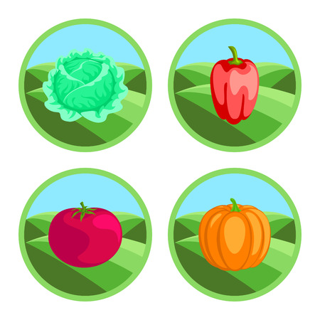 pumpkin tomato: Tomato, pepper, pumpkin, cabbage. Organic vegetables, round vector color badges or tags