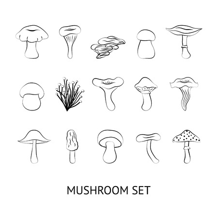 Different types of mushrooms, isolated on white background 版權商用圖片 - 100488083