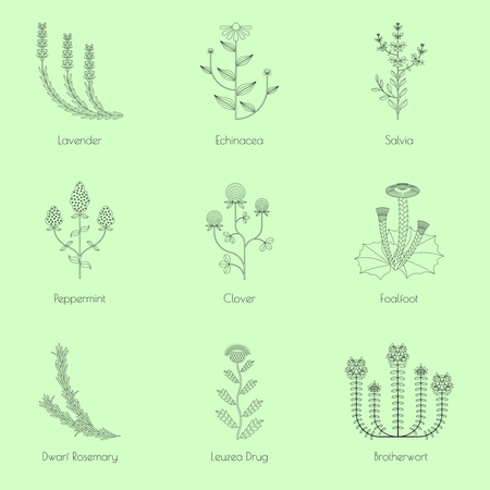 Medicinal herbs, contour icons isolated on green background