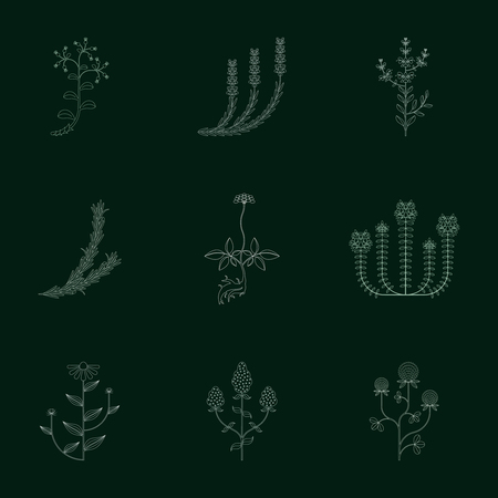 Medicinal herbs, contour icons isolated on dark background Illustration