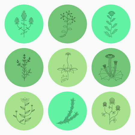 Medicinal herbs, contour icons isolated on white background