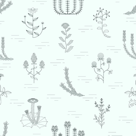 Medicinal herbs, seamless pattern on white background