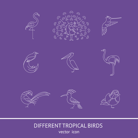 Birds are different species. Linear icon set. Can be used for logo, print, web site Ilustração