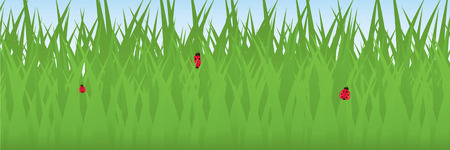 Three ladybugs relaxing on blades of grass; vector file contains clipping path.