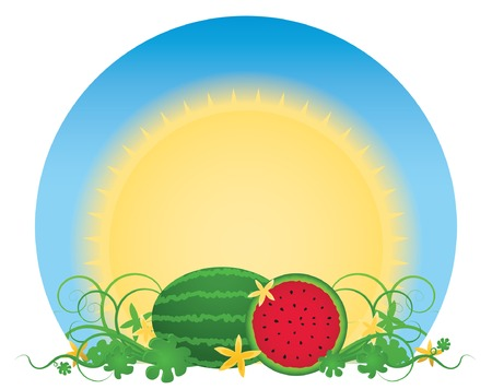 Glowing summer sun over a patch of juicy, ready-to-eat watermelons surrounded by swirling vines and creamy yellow flowers; vector file contains path. 免版税图像 - 5111401
