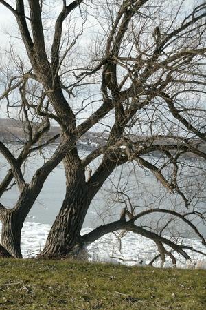 oak tree- lake Banco de Imagens