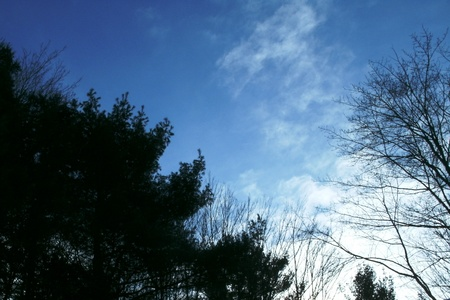 blue sky-scattered clouds photo