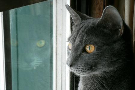 reflectie-ogen