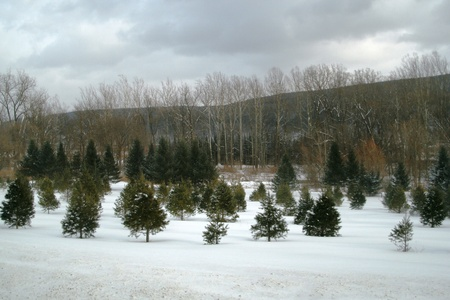 Tree farm Stockfoto
