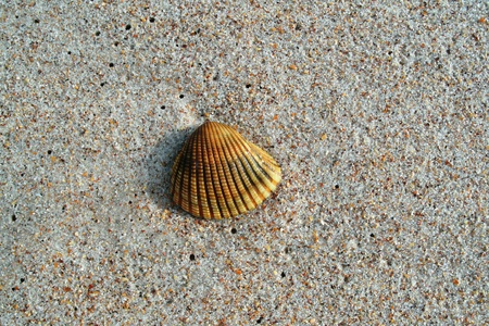 shell-sand Stockfoto