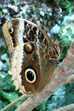 uil vlinder