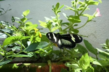 vlinder in de vlucht