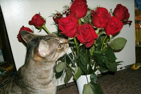 de rozen ruiken Stockfoto