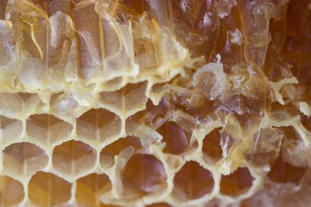 golden yellow khoney comb close up, background