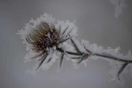christmas grounds: Frozen flowers plants in blue tone, winter