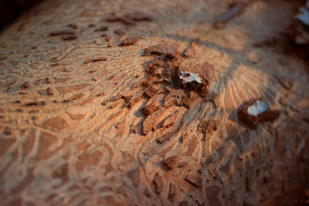 beatiful: wood with beatiful patterns carving on it