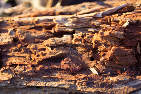texured piece of wood damaged by termites Stock Photo
