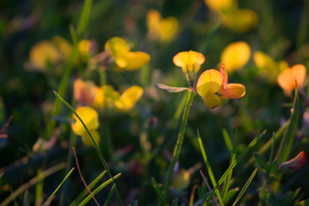 yellow wildf lowers background, spring close up Stock Photo