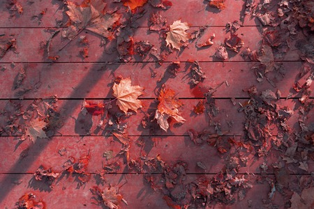shaddow: autumn leaves on wooden surface. sunlight and shaddow