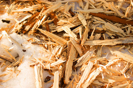 filings: Wood sawdust background closeup, top view, winter snow