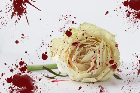 white rose in blood on white background. not isolated Stock Photo