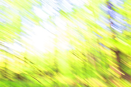 blurred forest background. green nature ecology concept Banco de Imagens