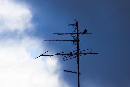 bird sit on an antenna. moody sky background Stock Photo