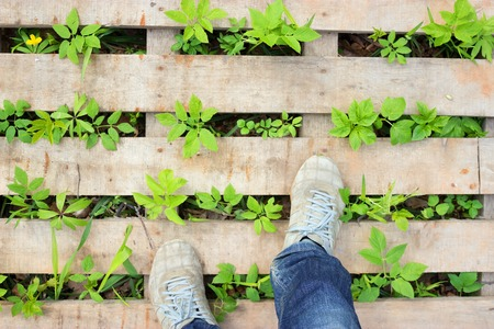 New green leaves grow through wooden pavement